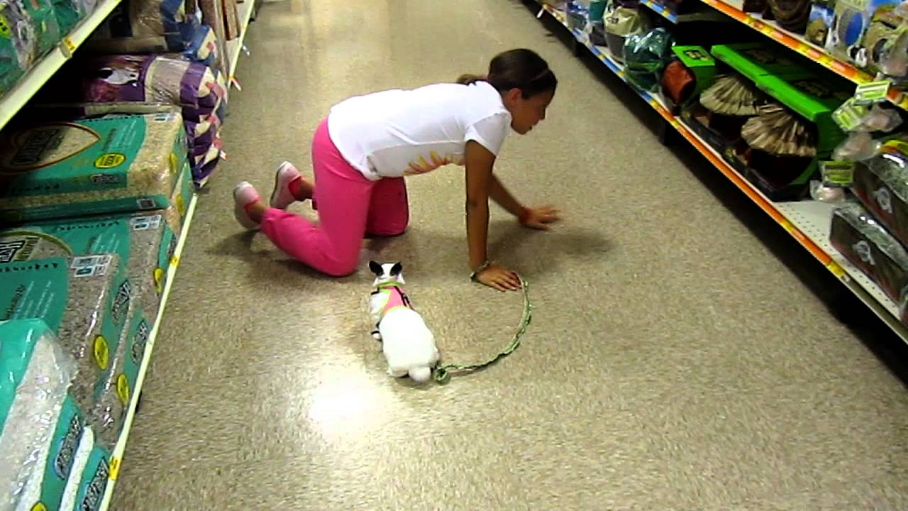 Taking The Bunny To Petsmart Part 2 Youtube