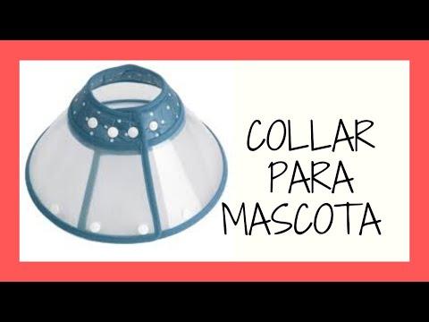 Como hacer collar isabelino collar para mascota casero for Como hacer un collar para perro