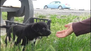 puppies-abandoned-on-busy-road-get-rescued-just-in-time