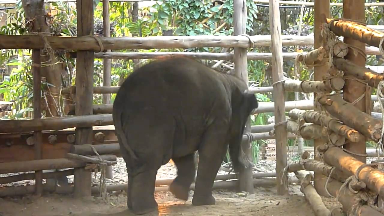 elephant tube free video