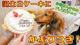 トキオ5歳の誕生日!ケーキに興味津々!?☆ ~・~・~・~・~・~・~...
