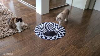 Cats vs Indoor Sinkhole (Can Our Cats See Optical Illusion)?