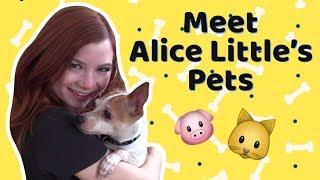 Meet Alice Little's Pets! #dogvideo #catvideo #alicelittle