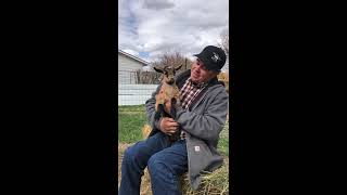 Farmer Pat and Baby Goats
