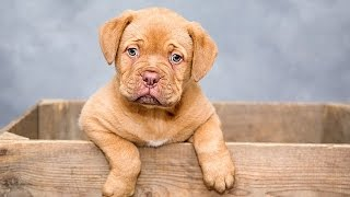 How to Potty Train a Puppy - Housebreaking /Crate Training Your Dog