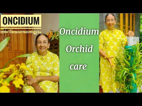 ONCIDIUM ORCHID CARE