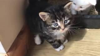 Как поживают котята? 4 недели / Kittens 4 weeks old