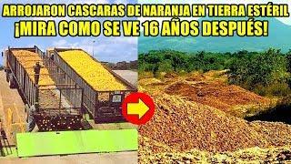 Arrojan miles de cáscaras de naranja en un terreno ESTÉRIL. ¡NO CREERÁS COMO SE VE 16 AÑOS DESPUÉS!