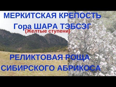 МЕРКИТСКАЯ КРЕПОСТЬ, гора ШАРА ТЭБСЭГ (Желтые ступени),  АБРИКОСОВАЯ РОЩА.