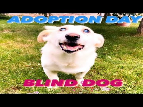 Rescue of scared homeless dog /Blind dog adopted