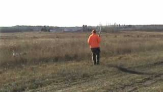 Free Hunting Dog Training Videos - Moving Tether