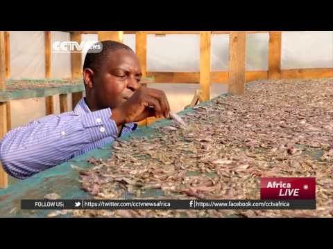 Malawi Fishermen Use Solar-powered Drying Tents