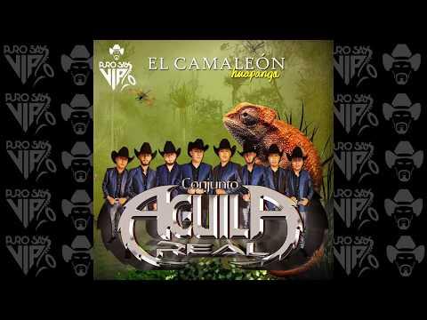 Conjunto Águila Real - Huapango el Camaleón 🤠 2018