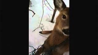 Hudson Cop Rescues Deer - Lance Wheeler Video