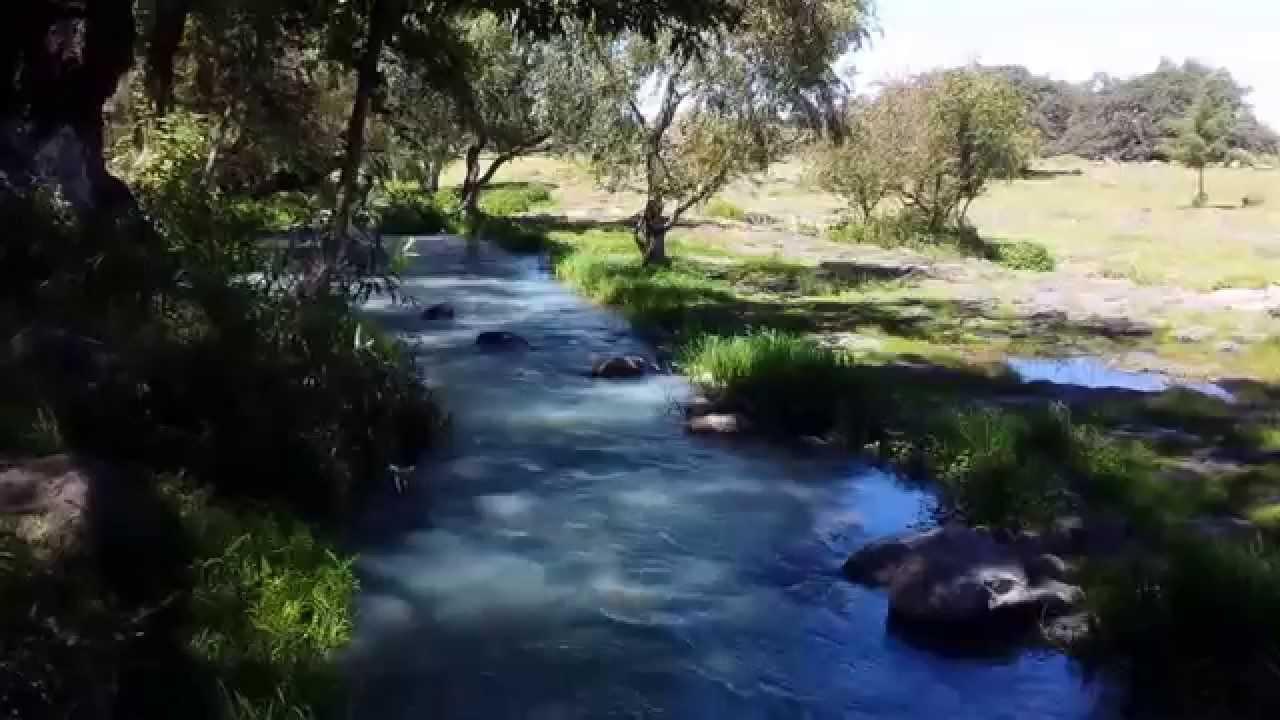 Manantial Los Cangrejos - YouTube