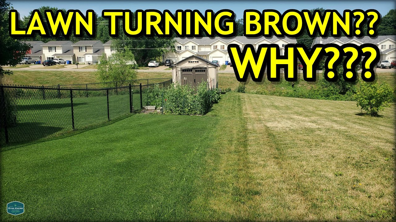 Here's WHY Your Lawn Might Be Turning BROWN...