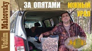 По Южному Уралу.  За опятами  2018. Поход за грибами в лес.