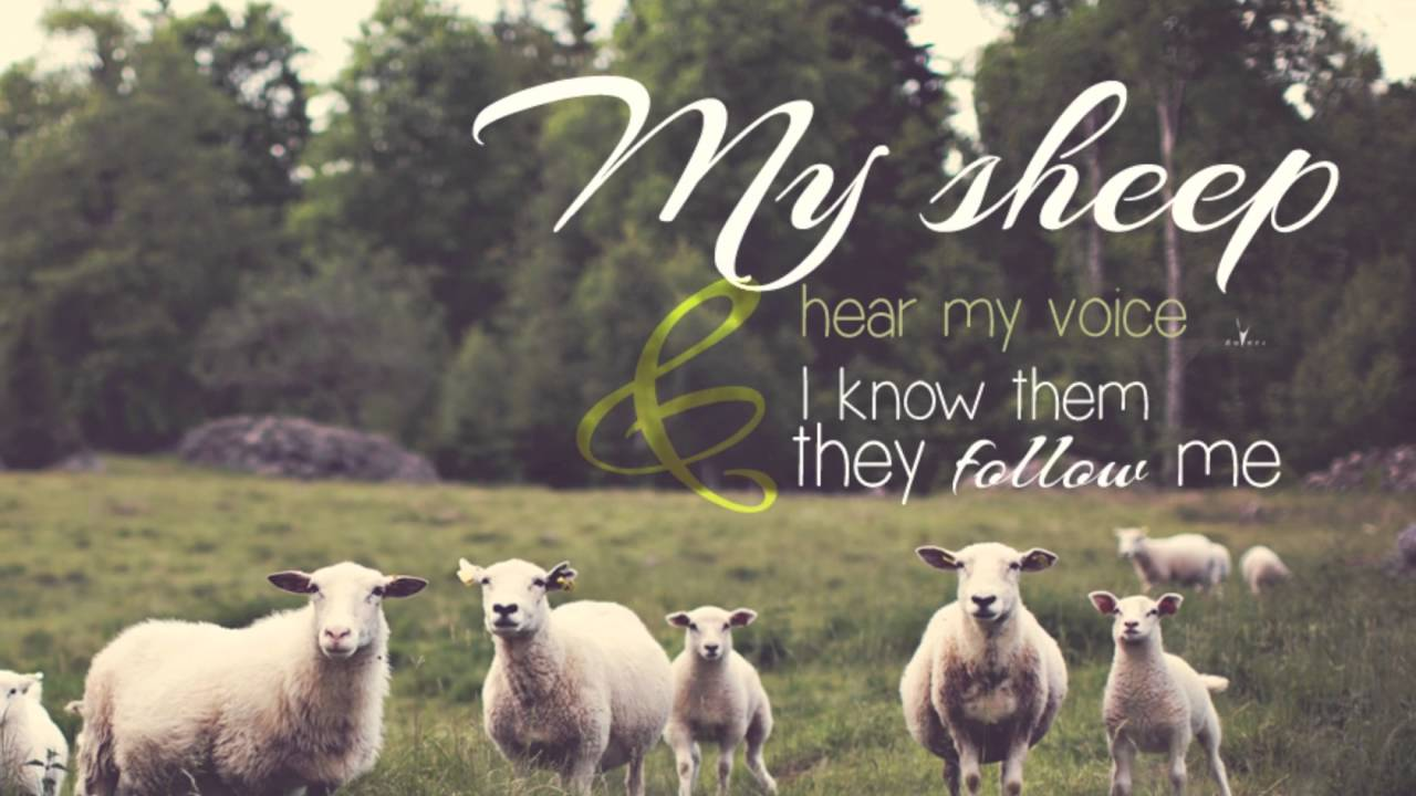 Image result for My Sheep hear my voice