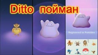 дитто пойман Ditto Покемон Го Pokemon Go