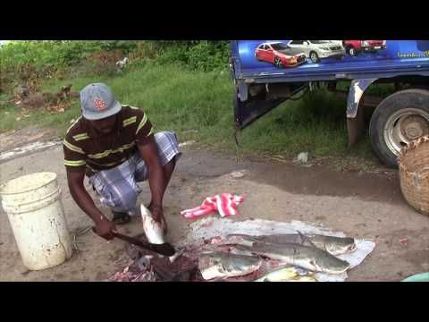 Guyana, New Leonora Market Video (HD)