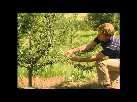 DVD 0004 Pruning Apple Trees English and Spanish