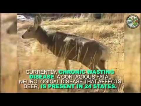 Chronic Wasting Disease - New Rules Affect Big Game Transport to Mississippi