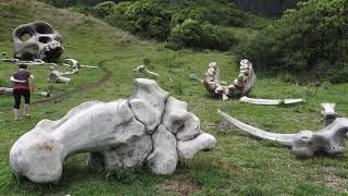 USA - 2017 - Oahu - Kualoa Ranch - Jurassic Park - Lost - Kong Skull Island