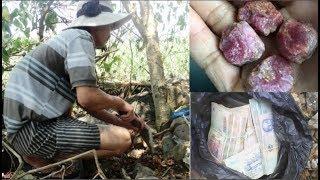 Đi chặt củi, nông dân nhặt được đá đỏ bán được 5 tỷ gây xôn xao Nghệ An..!!