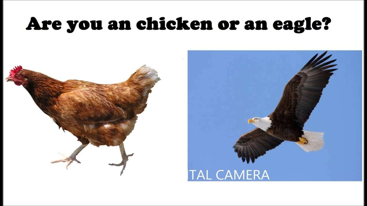 are you a eagle or an chicken youtube
