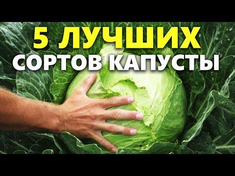Лучшие сорта капусты: какой сорт капусты выбрать для посадки