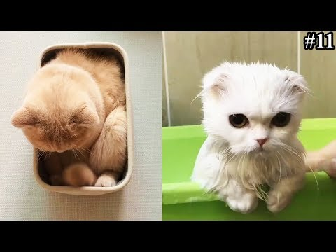 CUTE & FUNNY CATS COMPILATION VIDEO YOU MUST SEE || FUNNY CAT VIDEOS #11