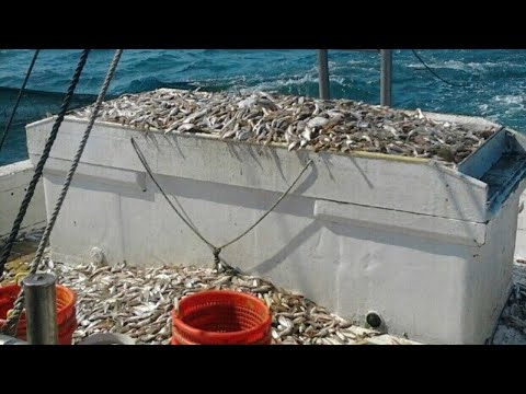 The Problem With North Carolina's Inland Coastal Fishery (North Carolina Fishing)