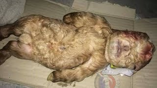Merkwürdige Babyziege, die mit menschlichen Eigenschaften geboren wurde