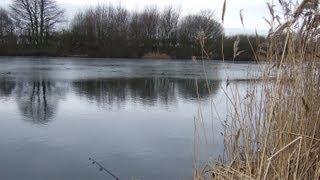 Fishermans Best Friend at Brandesburton 3&4 Pond (Hull & District Anglers Association)