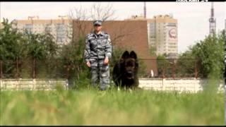 """""""Познавательный фильм"""": Собачья полицейская академия"""