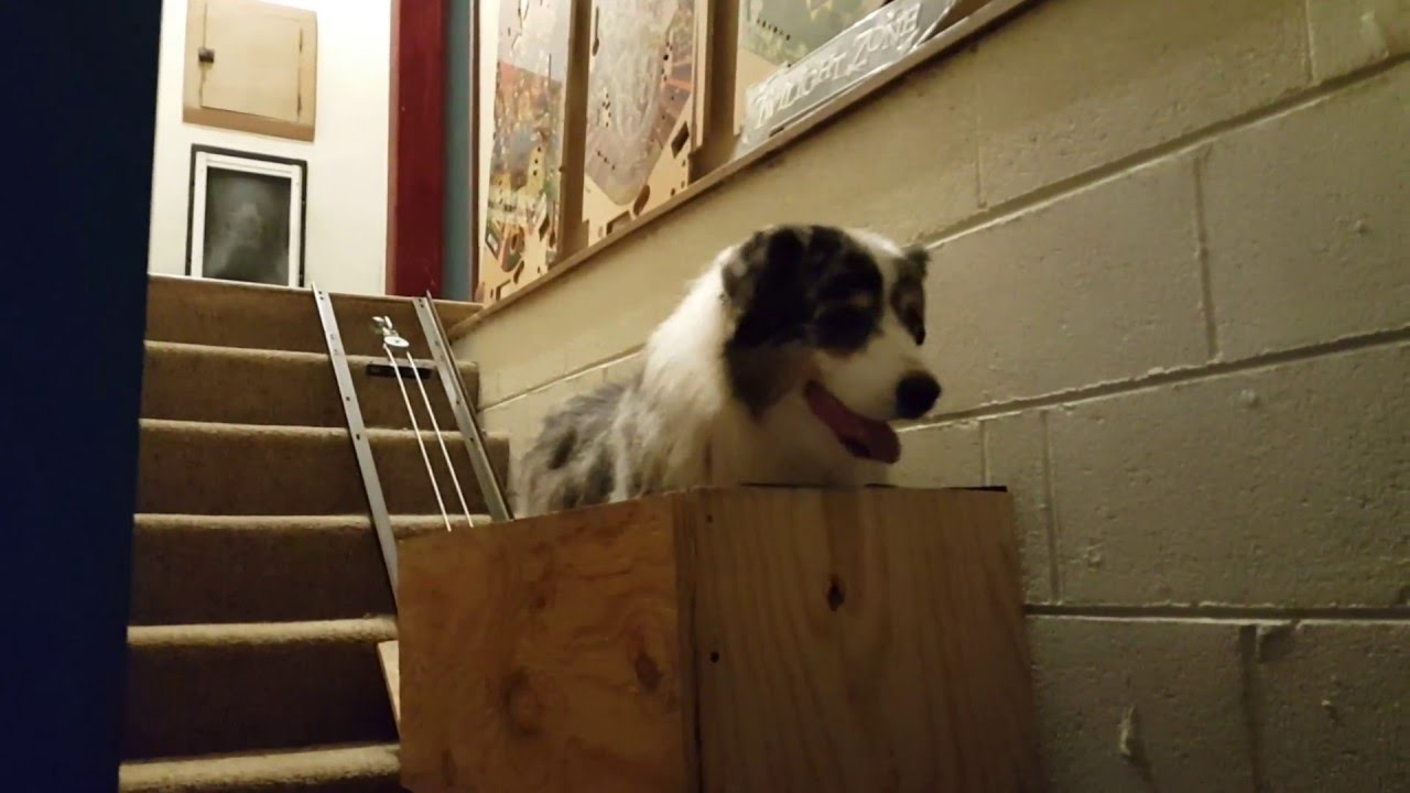 Doggy Stair Lift - YouTube