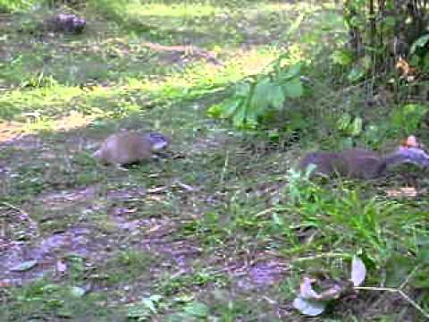 Two Squirrels Eating Dog Food