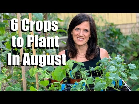 6 Crops to Plant in August for Late Summer Harvest
