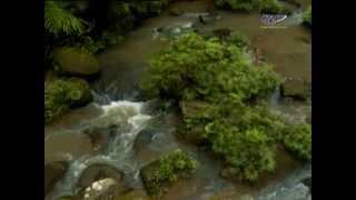 """RTM RENTAS 4x4 """"Cabaran Borneo Safari Ke Imbak Canyon"""""""
