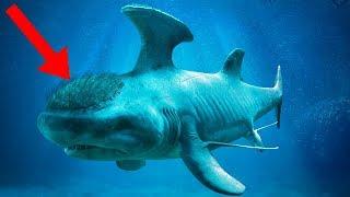 STRANGEST Sharks Of All Time!