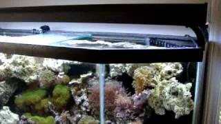 55 Gallon Saltwater Reef Aquarium With 10 Gallon Sump