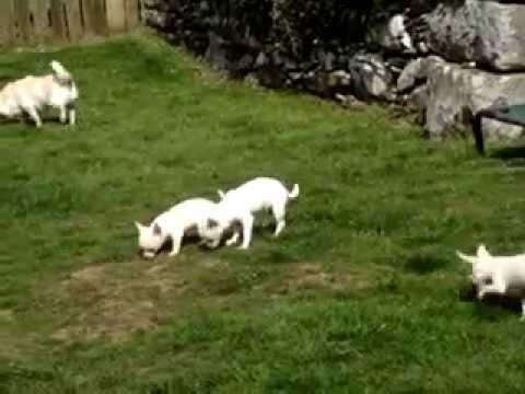 Pups enjoying the sunshine