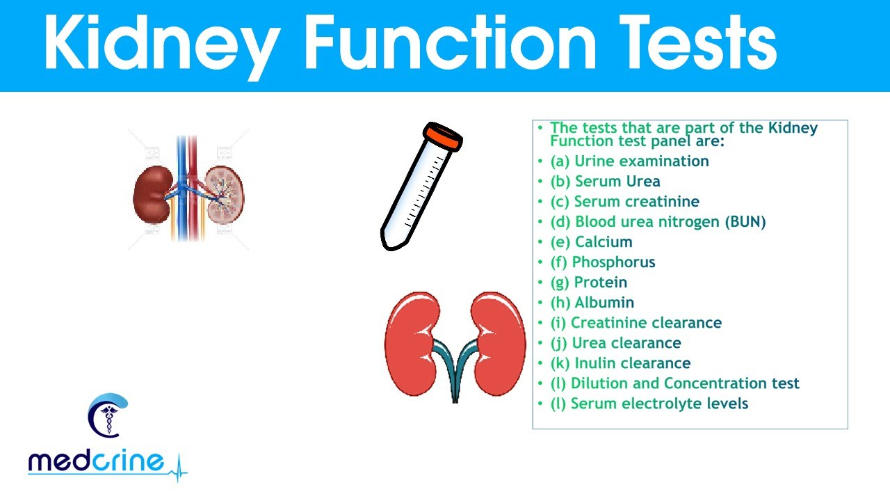 Kidney Function Tests And Interpretation Of Results Youtube
