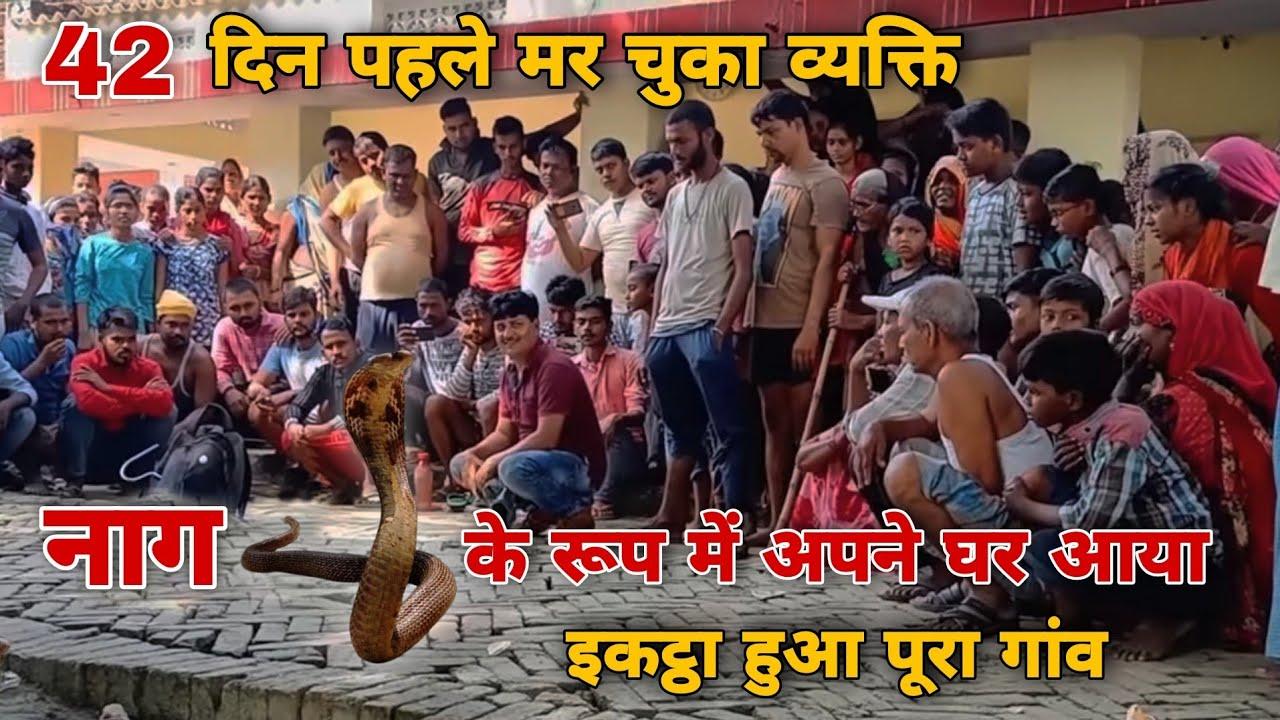 गाजीपुर जिले में हुई अनोखी घटना 42 दिन पहले मर चुका व्यक्ति सांप के वेष में आया घर, जाने पूरा वाकया।