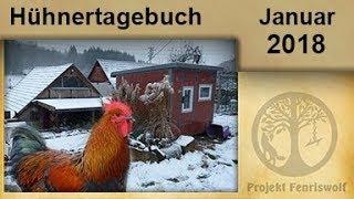Hühner Tagebuch Januar 2018 - der 2. Gehege Umbau