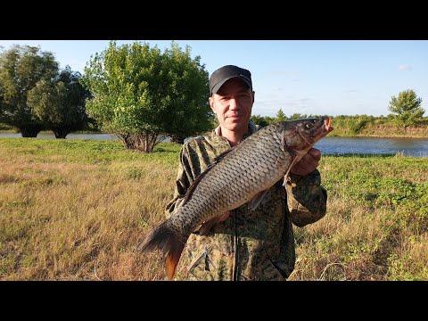 Ловля сазана и карася на жмых. Рыбалка на небольшой речке в Астрахани.