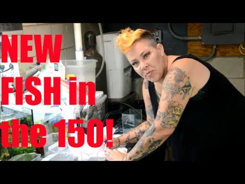 New Additions to the 150 and a Fish Unboxing!