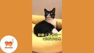 DONT WATCH - CUTE DOGS AND CATS _ FUNNY CATS AND DOGS VIDEOS COMPILATION #4 _ FUNNY IS NOT ENOUGH