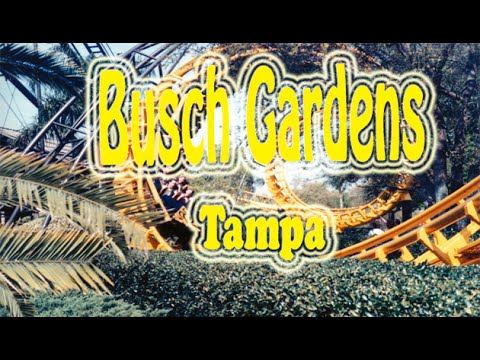 Florida Travel Destination & Attractions | Visit Busch Gardens Tampa Park Show