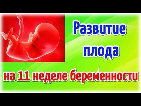 Развитие плода на 11 неделе беременности!